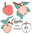 line apple set vector image