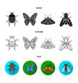 wrecker parasite nature butterfly insects set vector image vector image
