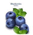 blueberries isolated on white backgrounds vector image vector image