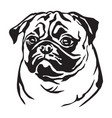 decorative portrait of dog pug vector image vector image