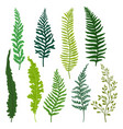 flat set of different types of fern twigs vector image