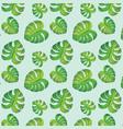 green monstera leaves vector image
