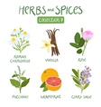 Herbs and spices collection 7 vector image vector image