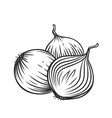 whole and half red onion bulbs vector image vector image