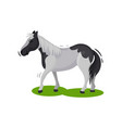 beautiful gray horse with big black spots walking vector image vector image