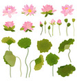 hand drawn lotus flowers and leaves vector image vector image