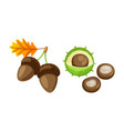 leaf with pair of acorns and chestnut set vector image vector image