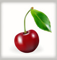 Sweet cherry icon vector image vector image
