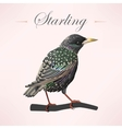 Starling on the branch vector image