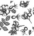 seamless pattern with black and white dog rose vector image