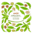 anise elements set vector image vector image