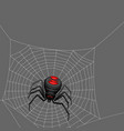 background with black widow spider vector image vector image