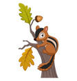cartoon chipmunk climbing on a tree vector image vector image