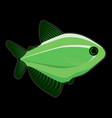 green fish on black background vector image vector image