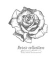 hand drawn sketch of rose single bud detailed vector image vector image