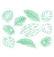 hand drawn tropical set palm leaves and branches vector image