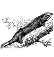 Tropical house gecko engraving vector image