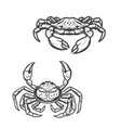 blue and opilio crab animal vector image vector image