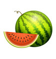 ripe striped watermelon realistic juicy vector image