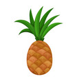 colorful fruit ananas or pineapple icon