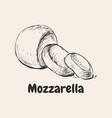 mozzarella hand drawn vector image