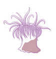 sea anemone icon ocean fauna aquatic life vector image