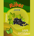 a juice of a black currant vector image vector image