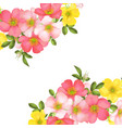 Dog-rose blooms wild rose vector image
