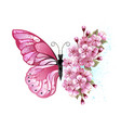 flower butterfly with pink sakura vector image vector image