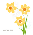 Greeting card with narcissus