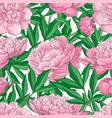 hand drawn peony seamless pattern vector image