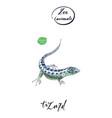 lizard gecko in watercolor vector image