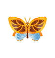 beautiful yellow brown and blue butterfly insect vector image vector image