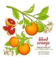 blood orange set vector image vector image