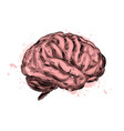 human brain from a splash watercolor colored vector image