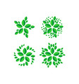 abstract flower leaf logo vector image vector image