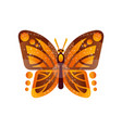 beautiful orange and brown butterfly vector image