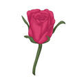 beautiful red rose with effect watercolor vector image vector image