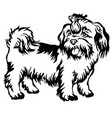 Decorative standing portrait of dog shih-tzu