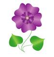 flower violet vector image
