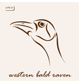 Western bald raven vector image vector image