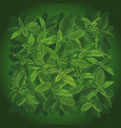 background small leaves top view vector image vector image