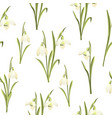 spring seamless pattern of galanthus flowers vector image vector image