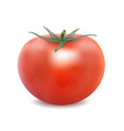 tomato isolated on the white background vector image vector image