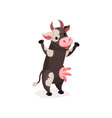 funny spotted cow milk cow standing on two legs vector image