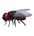 housefly on white background vector image vector image
