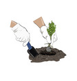 sketch planting a plant plants in the ground vector image vector image