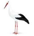 White stork vector image vector image