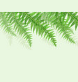 background with green fern leaves vector image