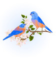 bluebirds thrush small songbirdons on an apple vector image vector image